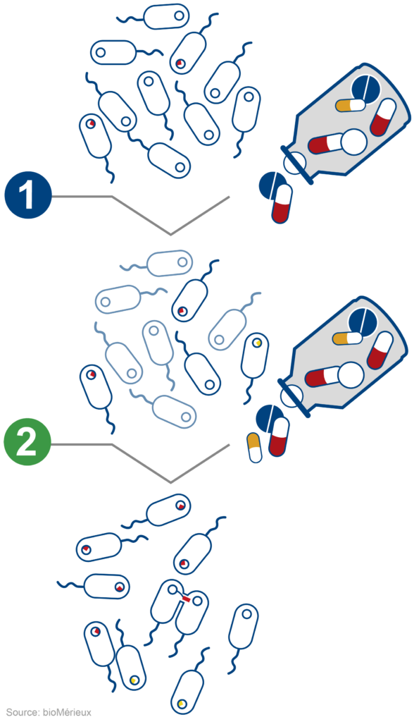 Modification of bacterial population when exposed to antibiotics